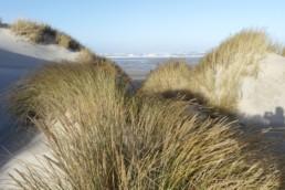 strand zee en duinen terschelling